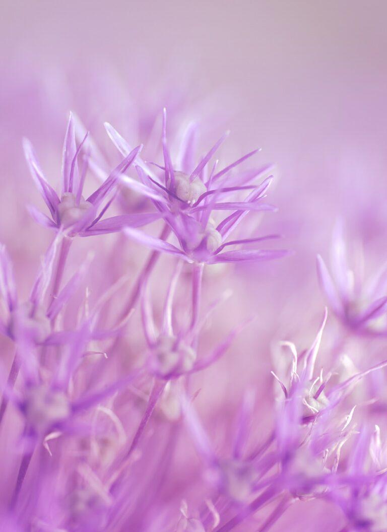 flowers, purple, fairy